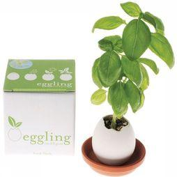 Noted Gadget Eggling white/mid green