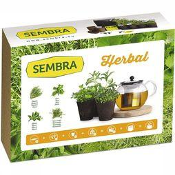 Gadget Kit Adult Herbal