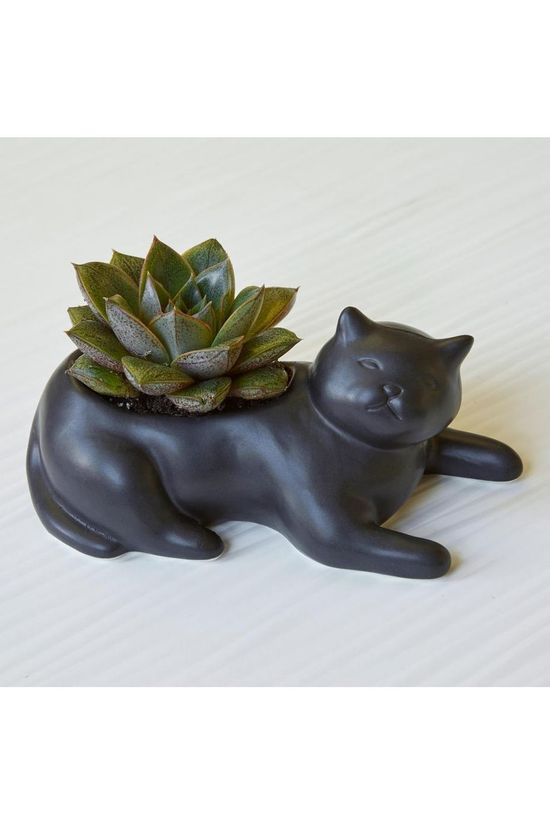 Kikkerland Gadget Cosmo The Black Cat Planter black