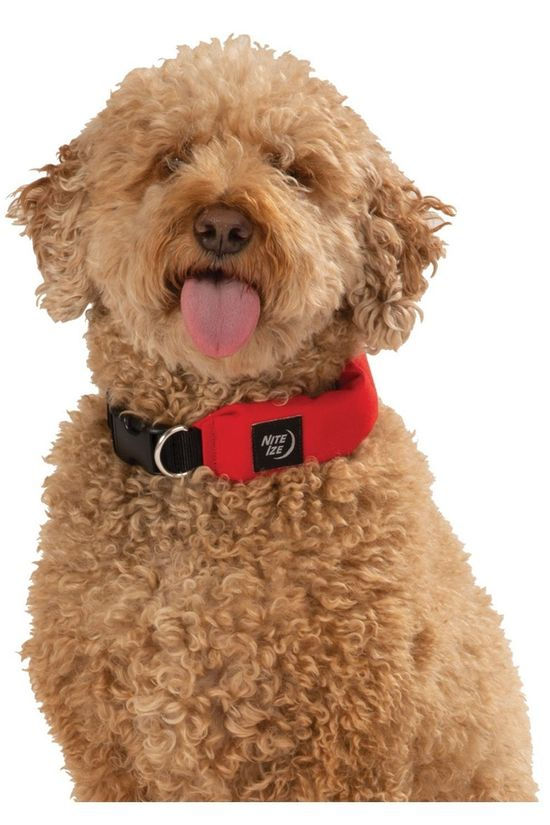 Nite Ize Gadget Raddog All-In-One Collar + Leash Medium mid red