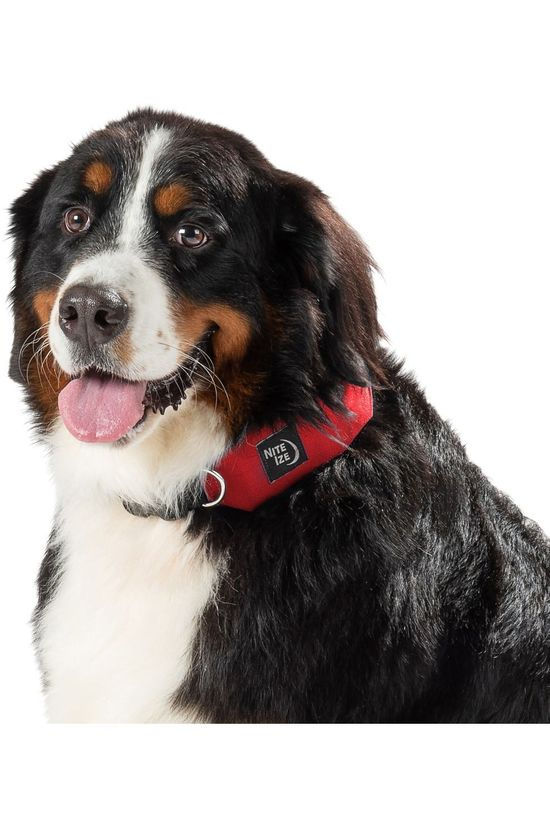 Nite Ize Gadget Raddog All-In-One Collar + Leash Large mid red