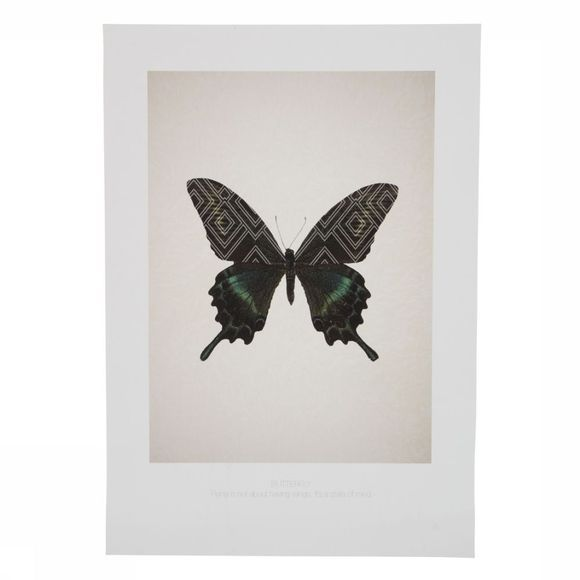 Foto Poster A3 Butterfly